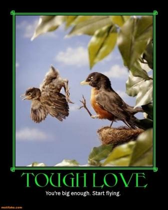 tough-love-bird-nest-nestling-kick-demotivational-posters-1400468961